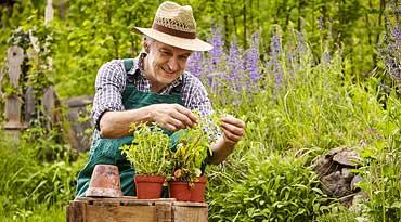 Növénygondozás, kertápolás