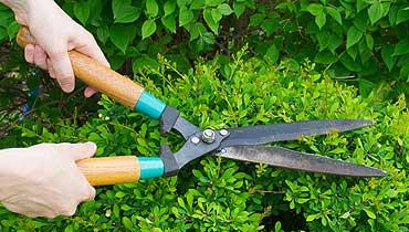 Bokor nyírás és kertápolás